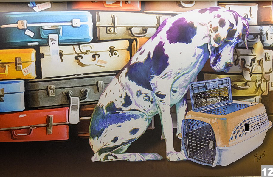 a spotted dog in font of suitcases